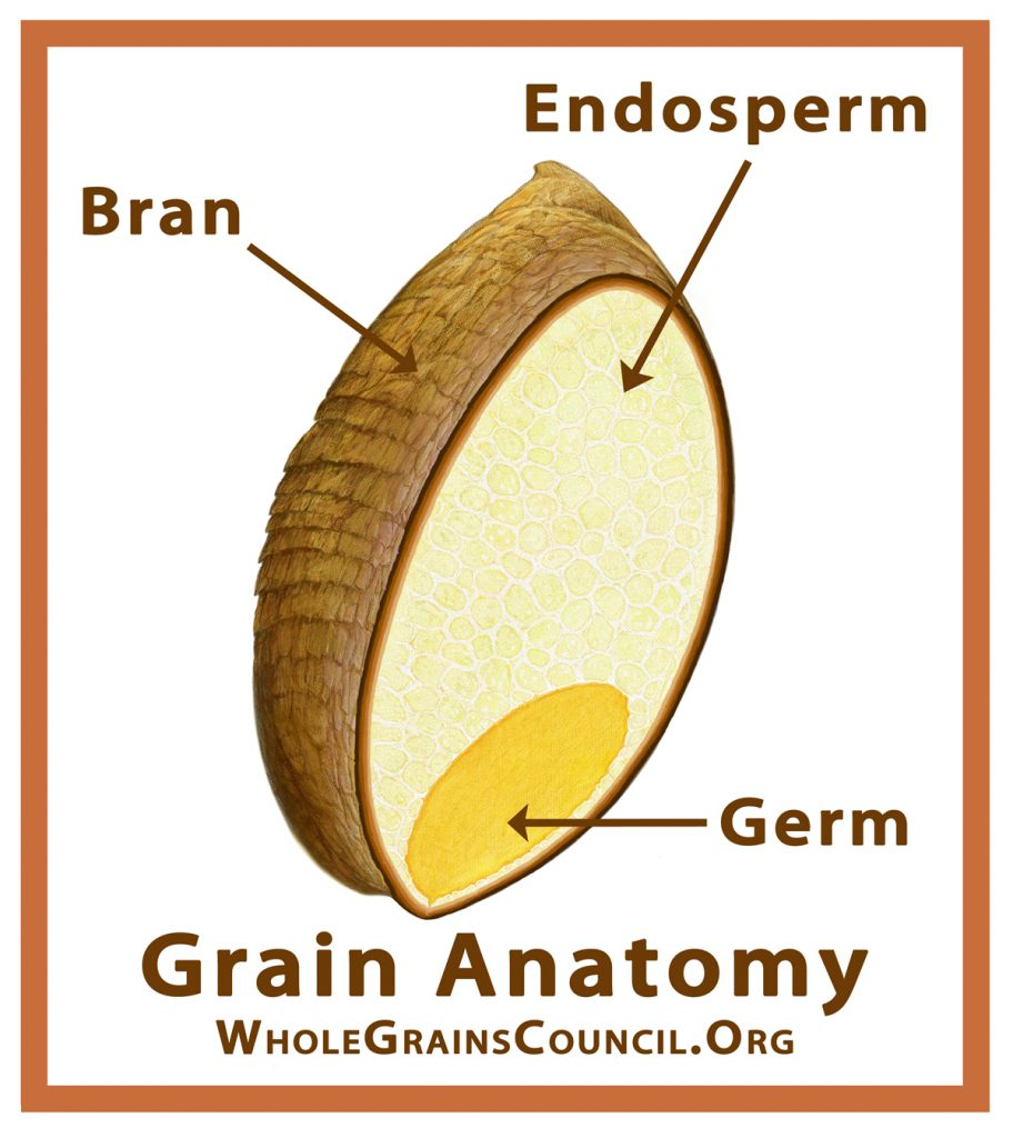 The Grain Anatomy