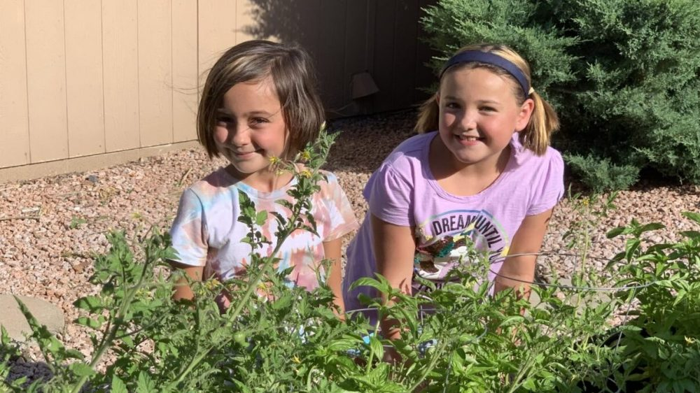 New Gardeners Learn from the Grow Food in Your Backyard Project